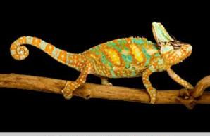 lizards snakes alive
