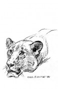 lioness illustration by Charles R. Knight